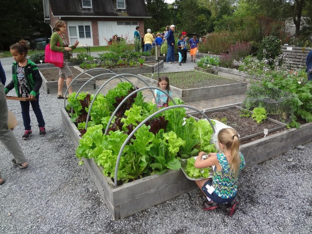School garden activity