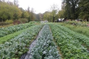 Harland's Creek Farm. Photo by Debbie Roos.