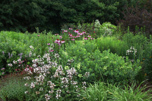Late May in the pollinator garden.